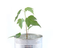 Free Tree In Can Royalty Free Stock Images - 6364149