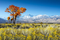 Tree In Desert Landscape / USA / America Mountains Royalty Free Stock Photos