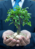 Tree In Hands Of Businessman Royalty Free Stock Photos