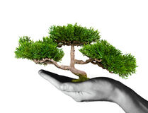 Tree In Human Hands Royalty Free Stock Photography