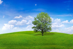Tree In Meadow Stock Photography