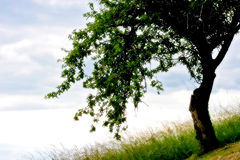 Free Tree In My Dream Stock Image - 148501