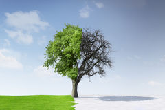Tree In Summer And Winter Royalty Free Stock Photo