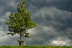 Tree In Sunshine Before Storm Clouds Stock Images