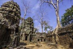 Tree In Ta Phrom, Angkor Wat, Cambodia, Asia. Stock Photo