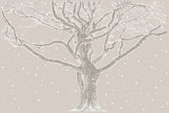 Tree In The Winter Royalty Free Stock Photography