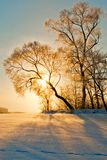 Tree in inei and sun. Royalty Free Stock Image