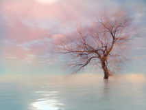 The tree in infinite. The tree in the water royalty free stock images