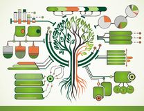 Tree infographic Stock Images