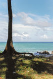 Tree infront of the ocean on Niel Island. An abandoned strech of beach on Niel Island Royalty Free Stock Image