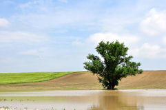 A tree in the inland water Stock Photos