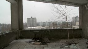 Tree inside the abandoned property. Chernobyl and Pripyat radioactive zone stock video