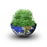 Tree inside earth Royalty Free Stock Image