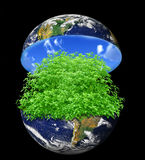 Tree inside earth Stock Images