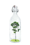 A tree inside glass bottle, abstract concept of savings an nature, isolated on white background. A tree inside glass bottle, abstract concept of savings an Stock Photos