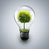 Tree inside light bulb Stock Photos
