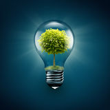 Tree inside light bulb Royalty Free Stock Photos