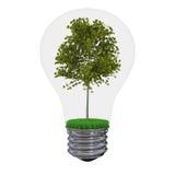 Tree inside lightbulb Stock Image