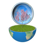 Tree inside planet Royalty Free Stock Photography