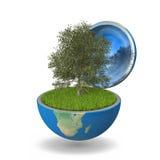 Tree inside planet Stock Photo