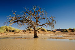 Tree inside water in desert landscape of Namib Stock Photo