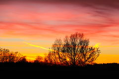 The tree intersection on a colorful December sky Stock Photos