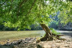 Tree By The Iskar River, Bulgaria. Tree by the Iskar River near Cherepish Monastery, Bulgaria royalty free stock photo