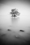 Tree on an island Royalty Free Stock Photos