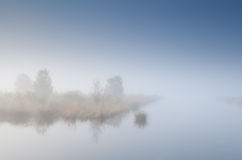 Tree island on lake in dense fog Stock Photo