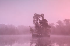 Tree island on lake in sunrise fog Royalty Free Stock Images