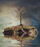 Tree  on an island. On the small lake Royalty Free Stock Images