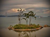 The tree on the island. Stock Photos