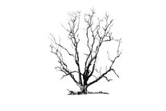 Tree. Isolate - concept picture of bad enviroment in black and white tone Stock Photo