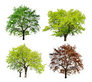 Tree isolated royalty free stock photography