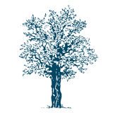 Tree. Isolated Royalty Free Stock Photography