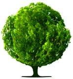 Tree  isolated Stock Photos