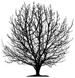 Tree  isolated Royalty Free Stock Image