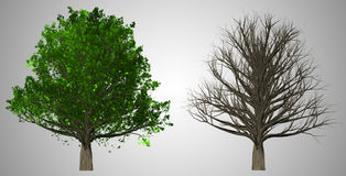Tree isolated on abstract background, 3D Illustration Stock Image