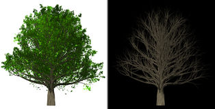 Tree Isolated abstract background 3D Illustration Stock Photos