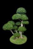Tree isolated black background. royalty free stock photography