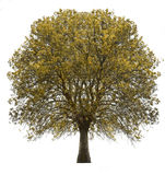 Tree isolated over white Stock Images