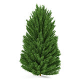 Tree isolated. Pinus fir-tree. At the white background Royalty Free Stock Image