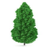 Tree isolated. Pinus fir-tree. Tree isolated at the white background. Pinus fir-tree Stock Photography