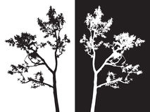 Tree isolated vector, black and white Stock Image