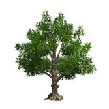 Tree isolated. Vector illustration Royalty Free Stock Photography