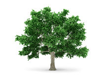 Tree isolated on white vector illustration
