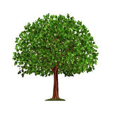 Tree isolated on white background. With green leaves stock illustration