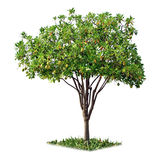 Tree isolated Stock Photos