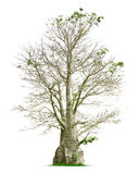 Tree. Isolated on white background Stock Photos