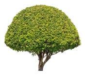 Tree isolated on white background Stock Photos